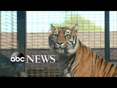 More details on the tiger attack in Kansas