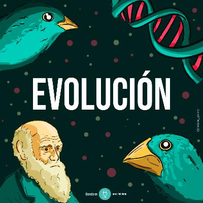 Episodio 4 - Evolución