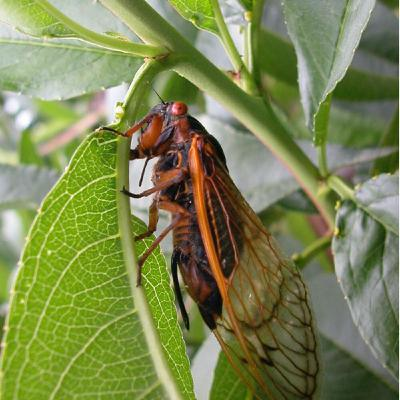 Season 2 Episode 6: Thinning Advice and an Insect Extravaganza