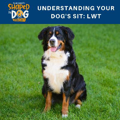 Understanding Your Dog's Sit: LWT