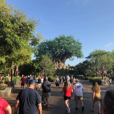 Episode 117: Discovering Animal Kingdom Discovery Island