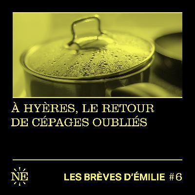 Les Brèves d'Émilie - À Hyères, le retour de cépages oubliés (#6)