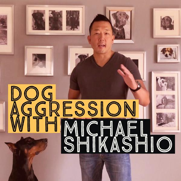 Aggression in Dogs: Michael Shikashio