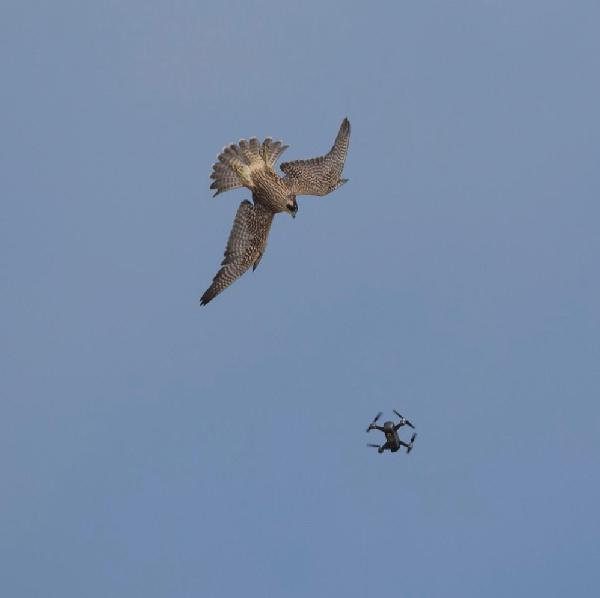 How to use drones without stressing wildlife