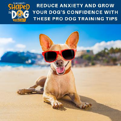 Reduce Anxiety and Grow Your Dog's Confidence with These Pro Dog Training Tips