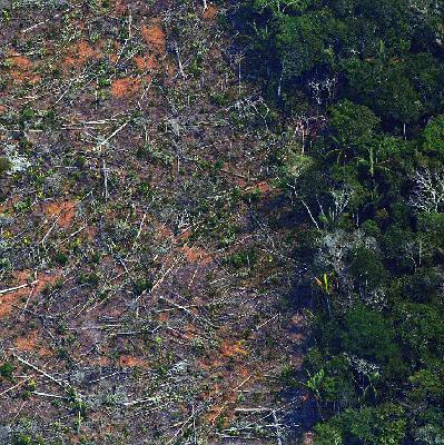Enquanto desmatamento sobe, Bolsonaro quer propaganda para melhorar imagem ambiental no exterior