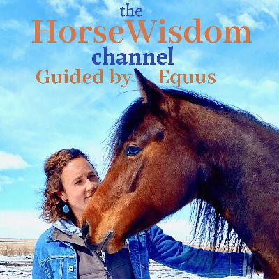 Welcome to the world of HorseWisdom :)
