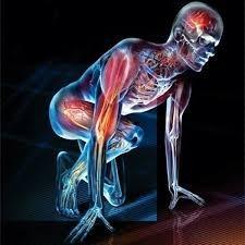 Configurando sua fisiologia - Podcast #002