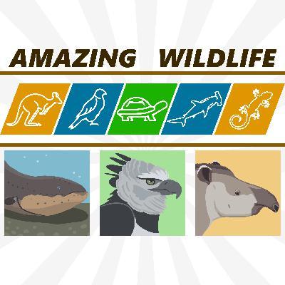 Electric Eel | Harpy Eagle | Tapirs