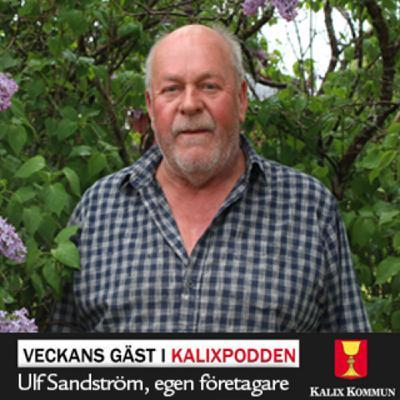 Ulf Sandström, egen företagare