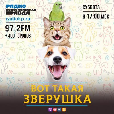За минувшие три года в российских семьях стало на 12 миллионов больше кошек и собак