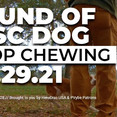 The Sound of DiscDog | Halting the Chewing and Mauling of DiscDog with King