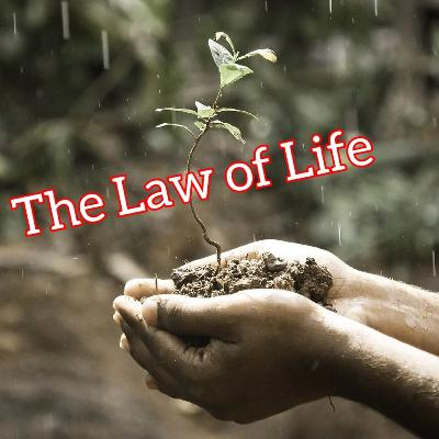 The Law of Life
