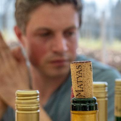 Weine vom Weingut Matyas in Coswig (Sachsen)