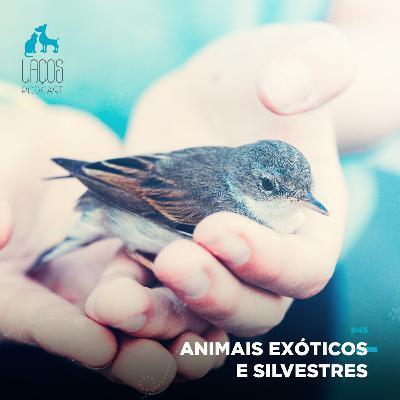 #45: Animais Exóticos e Silvestres