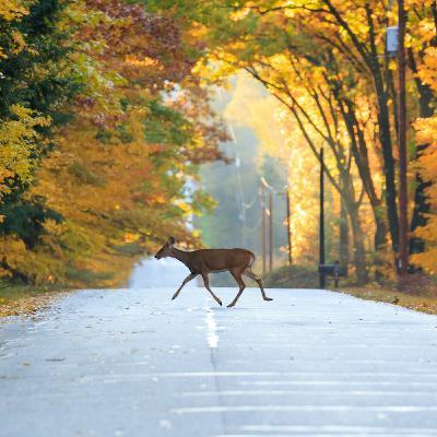 Sustainability Now! | Lane Boldman + Misty Boos | Wildlife Corridors | KCC Summit Preview | 1-11-21