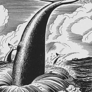 Moby Dick, chapter 57