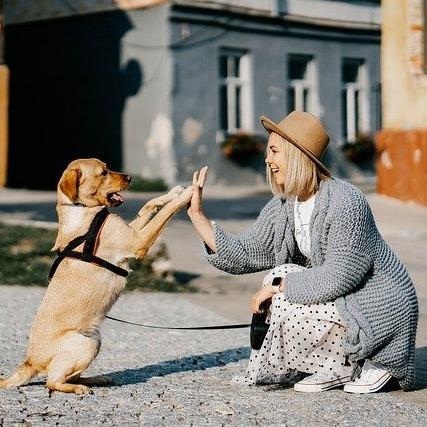 Como lo animales pueden contribuir a nuestro bienestar