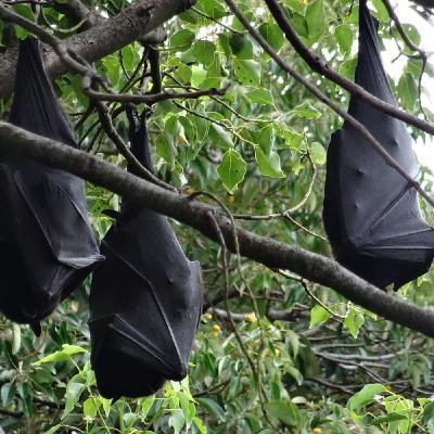 Percepción humana de los murciélagos, con Fulgencio Lisón | Oikos #28