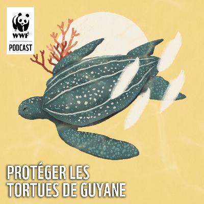 Protéger les tortues de Guyane