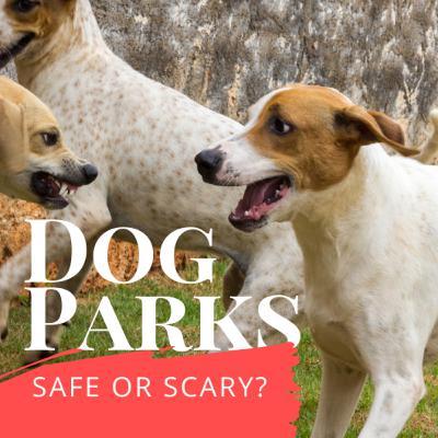 Dog Parks: safe or scary?