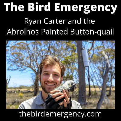 050 The Abrolhos Painted Buttonquail with Ryan Carter