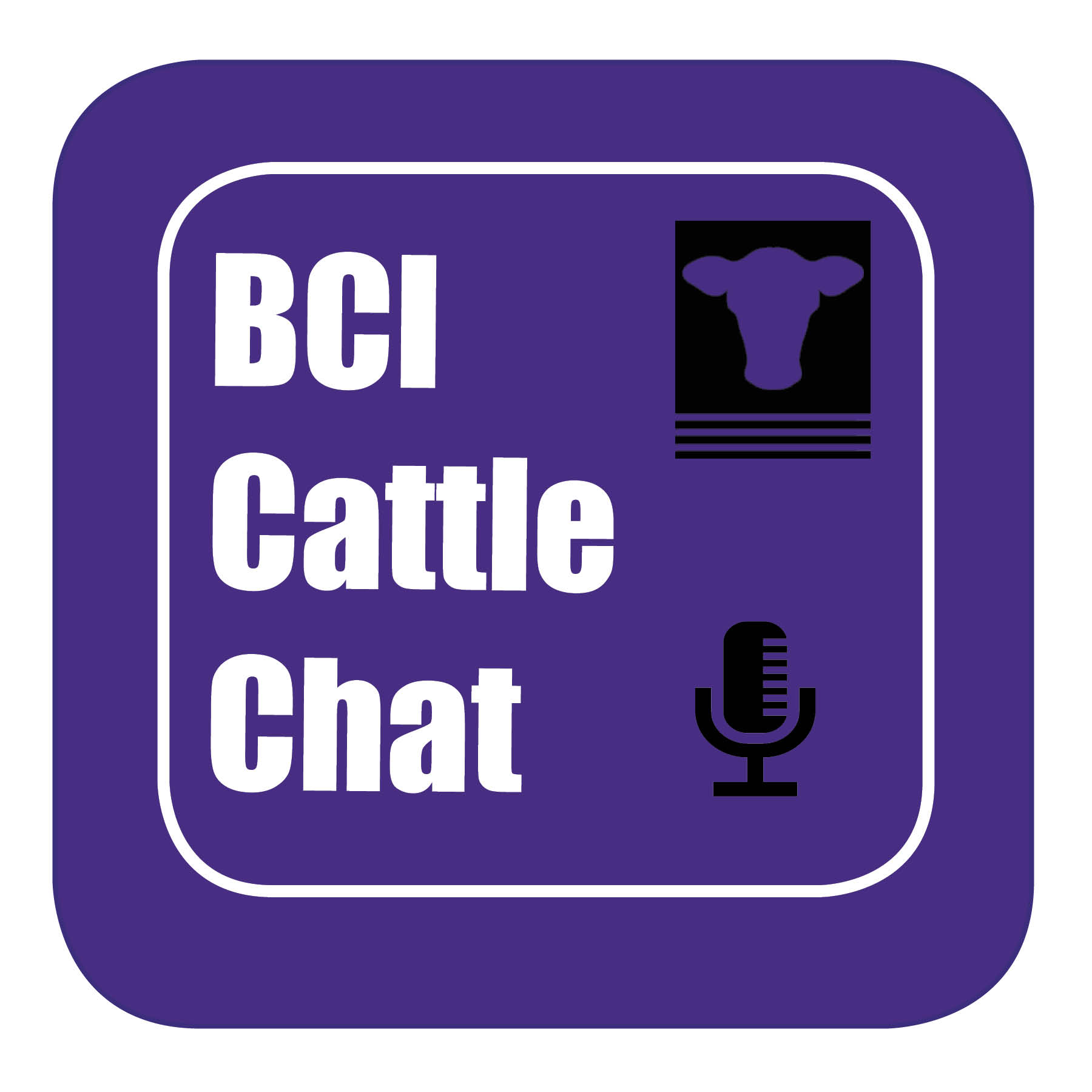 BCI Cattle Chat - Episode 1