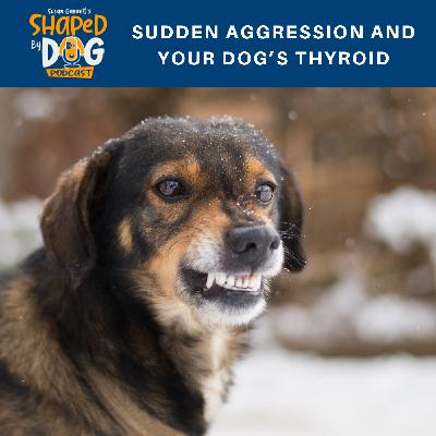 Sudden Aggression and Your Dog's Thyroid