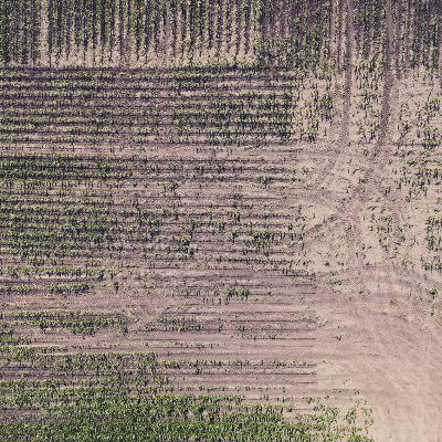 Episode 144: The Problem with Crop Insurance