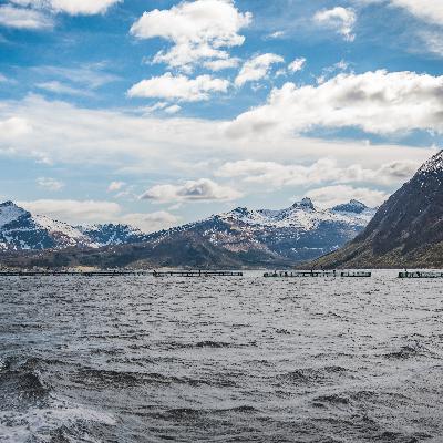 Kvarøy Arctic