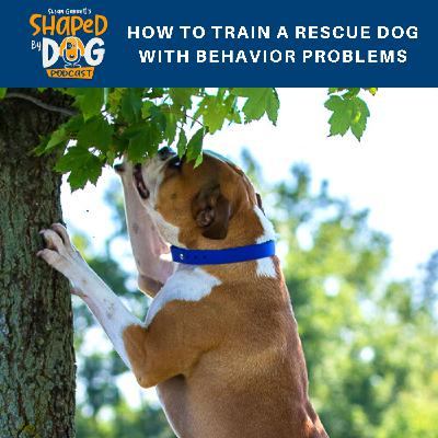 How to Train a Rescue Dog with Behavior Problems