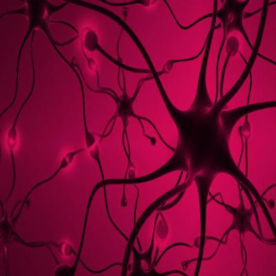 לראשונה: מדענים הצליחו לצפות במוח 'מתייק' זכרונות בשינה