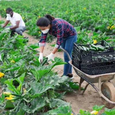COVID-19 and Food Safety in Farms