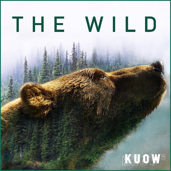 The 'Ghost Bears' of Washington State