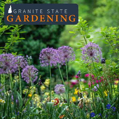 Annual and Perennial Blooms, Cut Flower Gardens, and Foam Flower