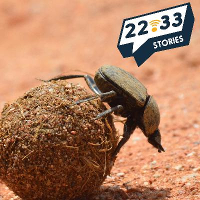Getting the Picture, Part 2 (Revenge of the Dung Beetles)