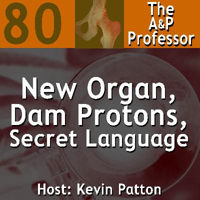 New Organ, Dam Protons, & Our Secret Language | TAPP 80