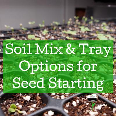 Soil Mix & Tray Options for Seed Starting