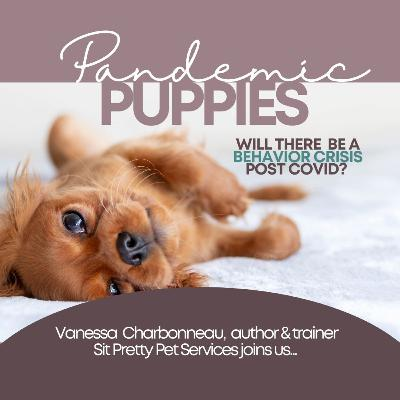 Pandemic Puppies: Will There Be A Behavioral Crisis?