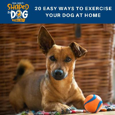 20 Easy Ways to Exercise Your Dog at Home