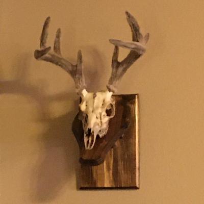Episode 2 (Oct 2020) Open Gate Program and DIY European Skull Mounts