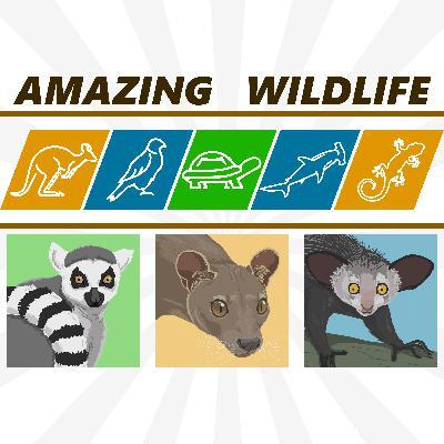 Ring-Tailed Lemur | Fossa | Aye-Aye