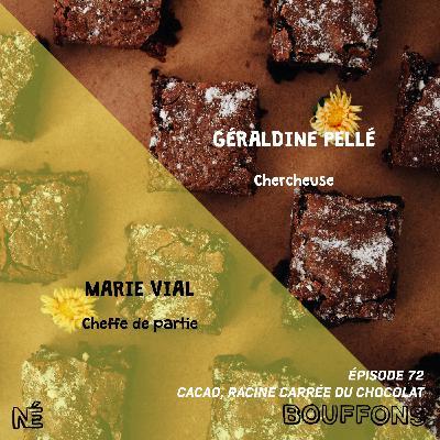 #72 - Cacao, racine carrée du chocolat