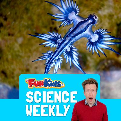 Cooling The Climate & The Blue Angel Sea Slug