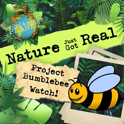 Ep #10 - Project Bumblebee Watch