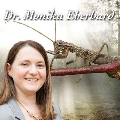 Trommelnde Fersenläufer - Dr. Monika Eberhard
