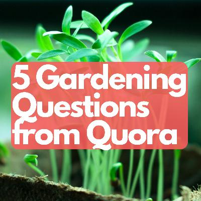 5 gardening questions from quora