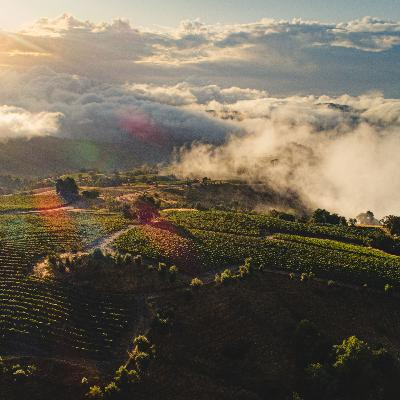 Stonestreet Estate Vineyards Dives into the Winemaking Process of Mountain Grown Cabernet Sauvignon