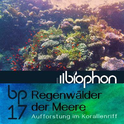 bp17: Regenwälder der Meere - Aufforstung im Korallenriff