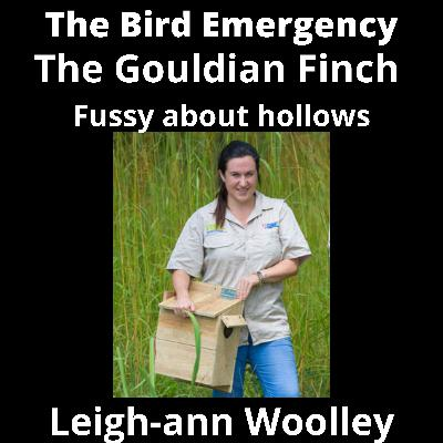 042 The fussy Gouldian Finch with Leigh-ann Woolley